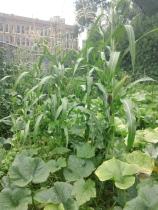 ecogarden 1